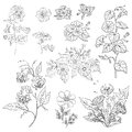 Flowers, set, outline Royalty Free Stock Photo