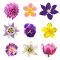 Flowers set realistic over white background Royalty Free Stock Image