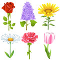 Flowers set vector of isolated on a white background Stock Photo