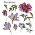Flowers set of watercolor peony, rose, tulip, jasmine flowers