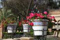 Flowers in seville spain flowerpots maria luisa park Stock Photography