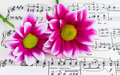 Flowers on sheet music Royalty Free Stock Photos