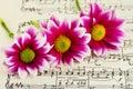 Flowers On Sheet Music