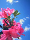 Flowers on the Sky Royalty Free Stock Photo