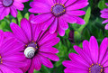 Flowers with a snail Stock Photography