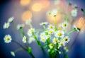 Flowers Soft Beauty