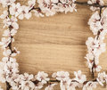 Flowers spring on wooden table background top view Royalty Free Stock Image