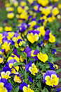 Flowers in springtime Royalty Free Stock Photo