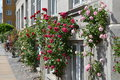 Flowers in the street of copenhaguen denmark Royalty Free Stock Photo