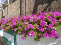 flowers on the street Royalty Free Stock Photo
