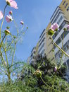 Flowers on a street flowerbed seen from below Royalty Free Stock Photos