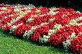 Flowers summer white and red on a flowerbed Stock Photo