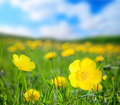 Flowers and sunny day Royalty Free Stock Images