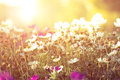 Flowers and sunshine bed of toned photo Stock Photography