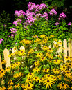 Flowers surround a yellow picket fence Royalty Free Stock Photo