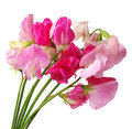 Flowers sweet pea isolated on white background Stock Photography