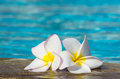Flowers on swimming pool Stock Image