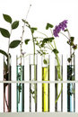 Flowers in test tubes Royalty Free Stock Photo