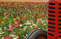 Flowers and tractor Royalty Free Stock Photo