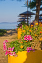 Flowers and trees on a path to the beach at morning sunshine sithonia greece Royalty Free Stock Photos