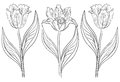 Flowers tulips contours vector set various monochrome on a white Stock Photography