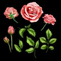 Vector realistic rose flower leaves stem set