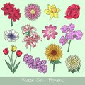 Flowers vector set collection full color Stock Images