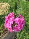 Flowers. Very Nice.