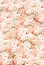 Flowers wall background with amazing pastel pink white roses, Wedding decoration, hand made. Floral, paint. Royalty Free Stock Photo