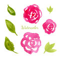 Flowers watercolor collection. Flowers and leaves elements set. Vector hand drawn illustration for invitation