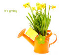 Flowers in watering can Stock Photography