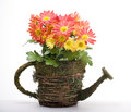 Flowers in watering can Royalty Free Stock Images