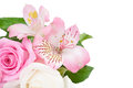 Flowers on white background bouquet of pink isolated a Royalty Free Stock Photos