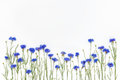 Flowers On White Background. T...