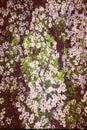 Flowers white brasil Stock Photos