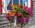 Flowers in window box brightly colored petunia hanging dow shingle siding from a beneath Royalty Free Stock Photo