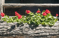 Flowers In Wooden Planter