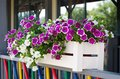 The flowers in the wooden planters are on the colorful frence Royalty Free Stock Photo