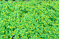 Flowers yard background natural yellow fowers Stock Photos