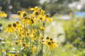 Flowers yellow field in the park using depth of field focus Royalty Free Stock Photography