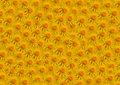 Flowers yellow fill large Royalty Free Stock Photography