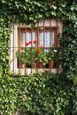 Flowery window Stock Images