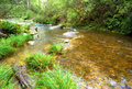 Flowing river in the otway national park australia surrounded by lush green rain forrest vegetation Stock Images