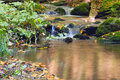 Flowing stream in the autumn forest Royalty Free Stock Photo