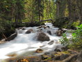 Flowing stream in Banff National Park, Canada Royalty Free Stock Image