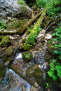 Flowing stream in the forest green Stock Photos