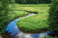 Flowing stream gruda between green meadows dzukija lithuania Stock Image