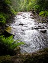 Flowing stream of Liffey Falls in Tasmania. The stream is planked by lush vegetation Royalty Free Stock Photo