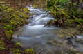 Flowing stream winding through the forst forest with Royalty Free Stock Images