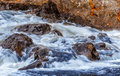 Flowing water over rocks in stream with autumn colored leaves on the shore Royalty Free Stock Image
